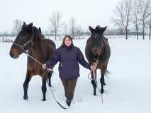 Trayendo los caballos adentro Fotos de archivo