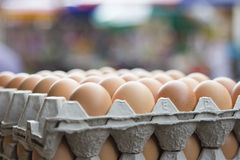 Trays of Chicken Eggs Stock Image