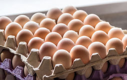 Trays with eggs Royalty Free Stock Photography