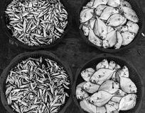 Trays of fishes. At a local small market at Phan Rang, Vietnam Stock Photography