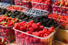 Trays of fresh berries on display at local market. Fresh berries on display. Organic and fresh. Food background. Display on local farmers market Stock Images