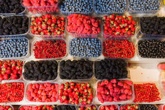 Trays of fresh berries on display at local market. Fresh berries on display. Organic and fresh. Food background. Display on local farmers market Royalty Free Stock Photography
