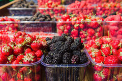 Trays of fresh berries on display at local market. Fresh berries on display. Organic and fresh. Food background. Display on local farmers market. Mulberry Royalty Free Stock Photos