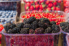 Trays of fresh berries on display at local market. Fresh berries on display. Organic and fresh. Food background. Display on local farmers market. Mulberry Royalty Free Stock Images