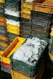 Trays Of Sardines On Ice Stock Images