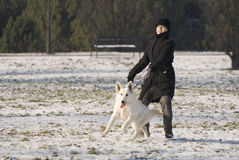 Trazione del cane Fotografie Stock Libere da Diritti