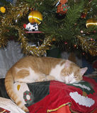 Trazione dell'albero di Natale Immagini Stock Libere da Diritti