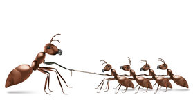 Trazione della corda della formica Immagini Stock