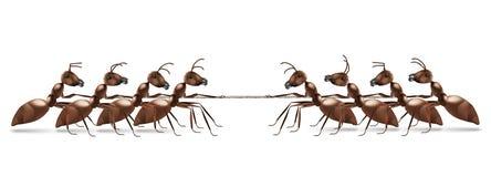 Trazione della corda della formica Fotografie Stock Libere da Diritti