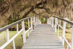 Träbro över träsk i South Carolina Royaltyfria Foton