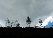Träd blandar in fördärvad byggnad Fotografering för Bildbyråer