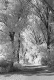Träd fodrad väg till och med ett träsk Arkivfoton