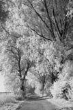 Träd fodrad väg till och med ett träsk Royaltyfri Fotografi