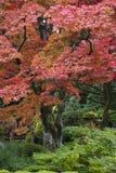 Träd för Japan Nikko Rinnoji tempellönn i nedgång färgar Arkivfoto