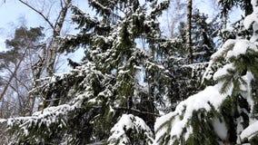 Träd i det insnöat vintern lager videofilmer