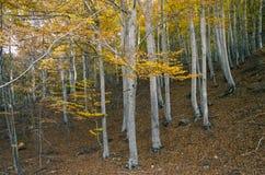 Träd i hösten, tappningfiltereffekt Arkivfoton