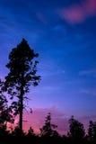 Träd i natthimlen Royaltyfri Bild