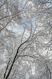 Träd i vintertid, filialer som täckas med vit snö, och is Arkivbild