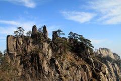 Träd på bergöverkant Arkivfoton