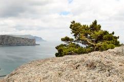 Träd på en stenig klippa som förbiser havet Royaltyfri Bild