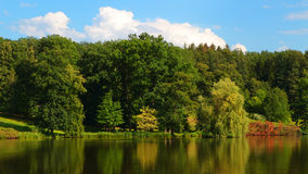 Träd på lakesiden i naturligt parkerar Royaltyfri Foto
