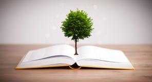 Träd som växer från en öppen bok Royaltyfri Bild
