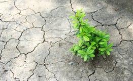Träd som växer på sprucken jord/växande träd/räddning världen/, Arkivbilder