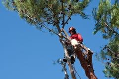 Trädbeskäraren som ner klipper, sörjer trädet Fotografering för Bildbyråer