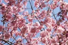 Trädblomningar Royaltyfri Foto