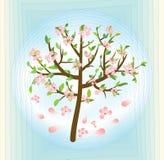 Trädet med rosa färger blomstrar, vårtemat på abstrakt begreppblåttbakgrund, vektordesignbeståndsdel Arkivbilder