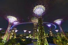 Trädgård vid fjärden Singapore Royaltyfri Foto