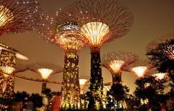 Trädgårdar vid fjärden i Singapore Fotografering för Bildbyråer