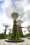 Trädgårdar vid fjärden Singapore Royaltyfri Fotografi