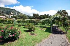 trädgården steg Fotografering för Bildbyråer