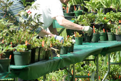 trädgårds- arbete Arkivbilder
