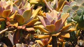 Trädgårds- bakgrund för kaktus Arkivbild