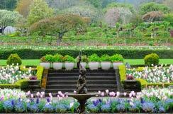 trädgårds- fjäder Arkivbild