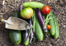 Trädgårds- grönsaker Arkivbild