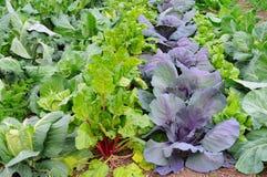 trädgårds- grönsakvinter Arkivfoton