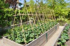 trädgårds- kök Fotografering för Bildbyråer