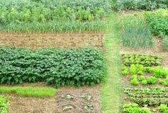trädgårds- kök Arkivfoto