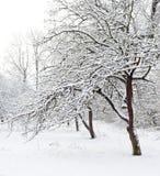 trädgårds- vinter Royaltyfria Bilder