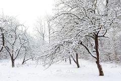 trädgårds- vinter Arkivbilder