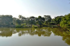 Träds reflexion i vatten Royaltyfri Foto