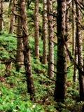Trädstammar i frodig skogbacke Arkivbild