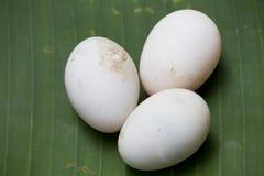 Tre ägg Royaltyfri Bild