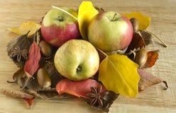 Tre äpplen i höstsidor Arkivfoto
