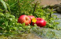 Tre äpplen nära en vår Arkivfoton