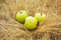 Tre äpplen på gräset Royaltyfri Fotografi