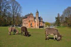 Tre åsnor som betar i en framdel av slotten Fotografering för Bildbyråer